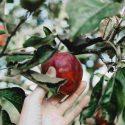fruit-min